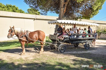 Visita guidata di Pianosa in carrozza