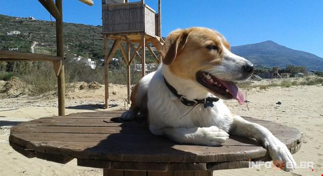 In vacanza all'Isola d'Elba con i nostri amici a quattro zampe: strutture e spiagge per cani