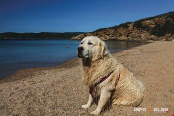 Cane sulla spiaggia di Lido di Capoliveri