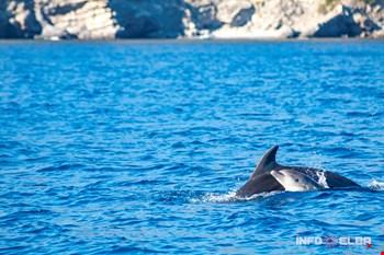 delfini isola d'elba,
