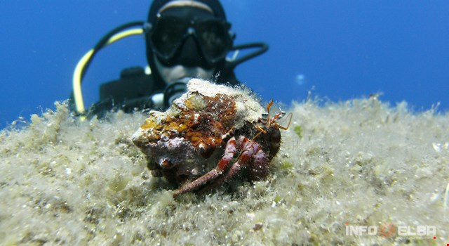 Diving and scuba diving on the Island of Elba