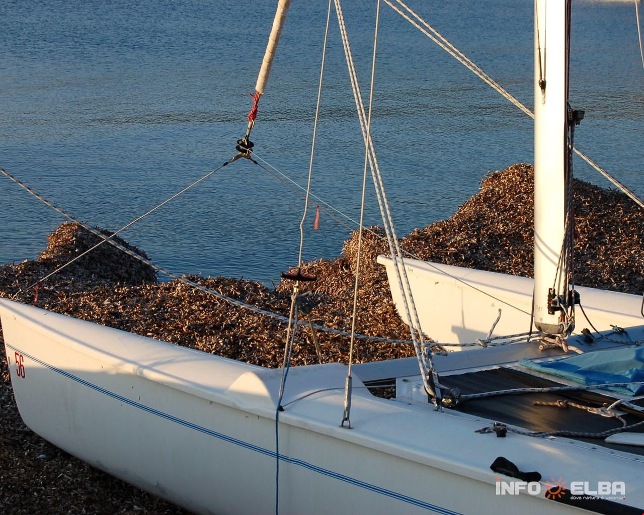 Spiaggia ricoperta di Posidonia